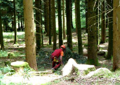 La situation de départ, un forestier façonne un arbre fraîchement abbatu